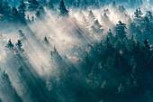 Vereinigte Staaten, North Carolina, Jackson County. Sonnenlicht durch immergrüne Bäume in Great Smoky Mountains in der Nähe von Bear Ridge Gap, Blue Ridge Parkway.