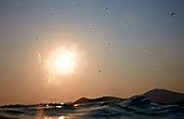 Tranquil scene with sea at sunset and silhouettes of paragliders in sky, Oludeniz, Mugla Province, Turkey
