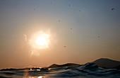 Ruhige Szene mit Meer bei Sonnenuntergang und Silhouetten von Gleitschirmen im Himmel, Ölüdeniz, Provinz Mugla, Türkei