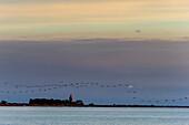 Zugvögel und Leuchtturm bei Skanör med Falsterbo, Skane, Südschweden, Schweden