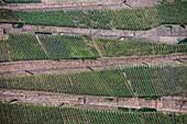 UNESCO Welterbe Oberes Mittelrheintal, Terassenförmiger Weinanbau, Blick von Burg Rheinstein, Rhein, Rheinland-Pfalz, Deutschland