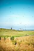 UNESCO World Heritage the Wadden Sea, salt meadow on Scharhoern close to Neuwerk island, federal state Hamburg, Germany, North Sea