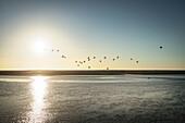 UNESCO World Heritage the Wadden Sea, Neuwerk Island, federal state Hamburg, Germany, North Sea