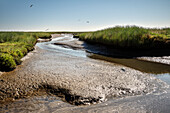 UNESCO World Heritage the Wadden Sea, salt meadow, Neuwerk Island, federal state Hamburg, Germany, North Sea