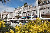 People stroll along seafront promenade seen through yellow flowers, Split, Split-Dalmatia, Croatia