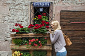 Beautiful blond woman smells red roses on window sill of half-timbered house in Altstadt old town, Bad Orb, Spessart-Mainland, Hesse, Germany
