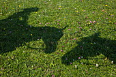 Shadows of two horse heads and one rider on pasture, Bessenbach Steiger, Westspessart, Spessart-Mainland, Bavaria, Germany