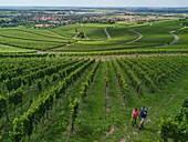Luftaufnahme von Paar auf Pfad entlang Reben am Weinberg Iphöfer Julius-Echter-Berg, Iphofen, Fränkisches Weinland, Franken, Bayern, Deutschland, Europa