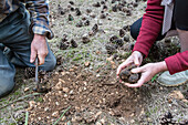 gathering white truffles with jack and christelle bois, nottonville (28), france