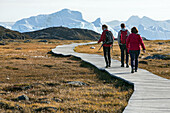 a walk on the wooden path that crosses the mossy plain of the marshes to reach the fjord's river of ice, jakobshavn glacier, 65 kilometres long, coming from the inlandsis, sermeq kujalleq, ilulissat, greenland