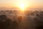 Flock of birds flying above atmospheric misty early morning landscape of trees and hills at sunrise, Samode, Rajasthan, India, Asia