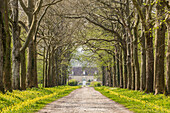 An avenue of trees in the countryside of Vienne, France, Europe