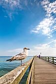 Seagulls and pier, Binz, Ruegen Island, Mecklenburg-Western Pomerania, Germany