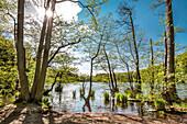Herthasee, Jasmund national park, Rügen Island, Mecklenburg-Western Pomerania, Germany