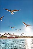 Seagulls and Kurhaus at sundown, Binz, Rügen Island, Mecklenburg-Western Pomerania, Germany