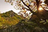 Felslandschaft des Ahrtals, bei Altenahr, Ahrsteig, Ahr, Rheinland-Pfalz, Deutschland