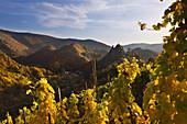 View from the vineyards to Are castle, Altenahr, Ahrsteig hiking trail, Rotweinwanderweg hiking trail, Ahr, Rhineland-Palatinate, Germany