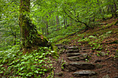 Hiking path to Grosser Falkenstein, Bavarian Forest, Bavaria, Germany