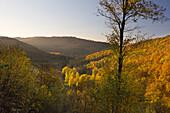 Forest in autumn, near Lennestadt, Rothaarsteig hiking trail, Rothaar mountains, Sauerland, North Rhine-Westphalia, Germany
