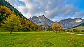 Ahorn im Herbst vor der Bergkulisse des Karwendel, großer Ahornboden, Tirol, Österreich