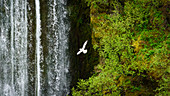 seagull in front of a waterfall in the highlands of Iceland
