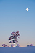 the moon shortly after sunset on the snow-covered hills of Luosto, finnish Lapland