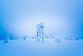 trees holding a heavy load of snow on the untouched hills above the city of Luosto, finnish Lapland