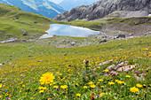Alpine Blumenwiese, Bergsee, Sommerblumen, Sommerwiese, Wanderurlaub, Natur, Hüttentour, Alpine Wiese, Pause, Wanderwege, Oberallgäu, Alpen, Bayern, Oberstdorf, Deutschland