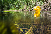 Spreewald Biosphere Reserve, Germany, Water Hiking, Kayaking, Local Recreation Area, Family Vacation, Family Outing, Paddling, Rowing, Wilderness, Excursion, Day Trip, River Landscape, Aquatic Plants, Water Flowers, Water Surface