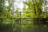 Biosphere Reserve Spreewald, Germany, Hiking, Kayaking, Recreation Area, Family Vacation, Family Outing, Paddling, Rowing, Wilderness, Excursion, Day Trip, Bridge, Wooden Bridge, Moss