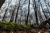 Biosphere Reserve Spreewald, Brandenburg, Germany, Water Hiking, Kayaking, Recreation Area, Wilderness, Day Trip, Forest, Beech Grove, Moss, Deadwood, Deciduous Trees, Beech trees, Deciduous Forest