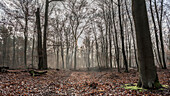 Spreewald Biosphere Reserve, Brandenburg, Germany, Kayaking, Recreation Area,  Wilderness, Day Trip, River Landscape and beech grove, Deciduous Forest, Winter Scenery at dawn, Nature Trail