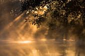 Spreewald Biosphere Reserve, Brandenburg, Germany, Kayaking, Recreation Area, Wilderness, River Landscape in the morning mist, Solitude, Water reflection at sunrise