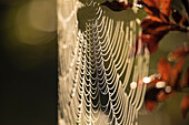 Spreewald Biosphere Reserve, Germany, recreational area, spider spinning a cobweb, abstraction, Indian summer