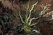 Germany, Bavaria, Alps, Oberallgäu, Oberstdorf, winter landscape at night, winter holidays, forest at night