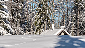 Germany, Bavaria, Alps, Oberallgaeu, Oberstdorf, Winter landscape, Winter holidays, Hiking, Winter hiking trail, Mountain hut in a Coniferous forest, Snow