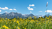 Germany, Bavaria, Alps, Oberallgaeu, Oberstdorf, Summer landscape, Summer holidays, Flower meadow, Flowers, Biodiversity, Hiking, Mountains