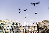 birds on Plaza Vieja in early morning, doves, historic town, center, old town, Habana Vieja,  family travel to Cuba, holiday, time-out, adventure, Havana, Cuba, Caribbean island