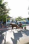 Horse-drawn carriage, horse cart and shadow on an empty street, colonial town, family travel to Cuba, parental leave, holiday, time-out, adventure, Cienfuegos, Cuba, Caribbean island