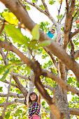boy, 6 years, climbing in a tree, kids playing outside, nature, balance, sport, danger, dangerous, at the beach of La Boca, family travel to Cuba, parental leave, holiday, time-out, adventure, MR, La Boca, Trinidad, Cuba, Caribbean island