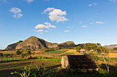 Mogotes and tobacco fields in Vinales, climbing region, loneliness, beautiful nature, family travel to Cuba, parental leave, holiday, time-out, adventure, National Park Vinales, Vinales, Pinar del Rio, Cuba, Caribbean island