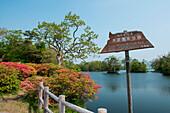 Idyllic scene with trees, flowering azaleas and water in Onuma-Quasi National Park, Onuma-Quasi National Park, Hakodate, Hokkaido, Japan, Asia