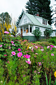 Colorful flowers adorn the garden in front of a white wooden house, Petersburg, Mitkof Island, Alaska, USA, North America