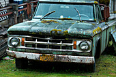 A green Dodge, sporting mosses, rests in a yard beside a house, Wrangell, Wrangell Island, Alaska, USA, North America
