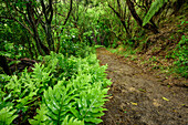 Weg führt durch Regenwald mit Farnen, Abel Tasman Coastal Track, Great Walks, Abel Tasman Nationalpark, Tasman, Südinsel, Neuseeland