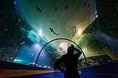 Aquarium Havets Hus, Lysekil, Bohuslän, Sweden
