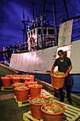 Langustenfischer beim Abladen im Fischereihafen Grebbestad, Fjällbacka, Bohuslän, Schweden