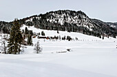 snowy landscape, Rohrmoos, Hoernerdoerfer, Allgaaeu, Baden-Wuerttemberg, Germany, Europe, winter, Alps