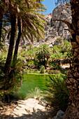 Palm tree lined river, canyon, Preveli, Crete, Greece, Europe