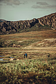 Hiker on a route through greenland, greenland, arctic.